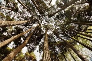 پروژه پلاک کوبی درختان - شرکت سورنا پردازش