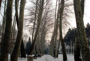 پروژه پلاک کوبی درختان منطقه 1 تهران - شرکت سورنا پردازش