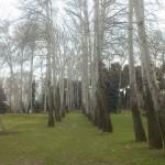 پروژه پلاک کوبی درختان کاخ سعد آباد