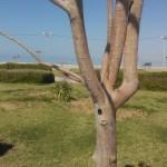 طرح پلاک کوبی و شناسنامه دار کردن درختان بندر بوشهر